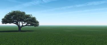 panorama drzewo Fotografia Stock