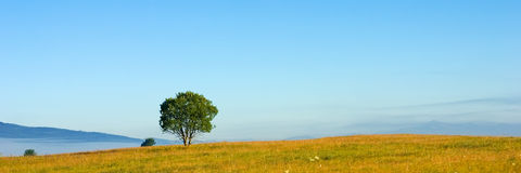 panorama drzewo Zdjęcie Stock