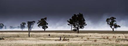 Panorama du feu de brousse photo libre de droits