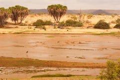 Panorama du Kenya en Afrique Image stock