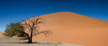 Panorama of Dune 45 at Sossusvlei Royalty Free Stock Images