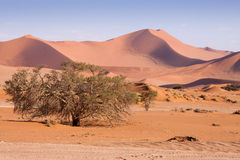Panorama of Dunes in Namib Desert , Namibia Stock Images