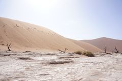 Panorama of dunes in Namibia. And the sun Royalty Free Stock Photos