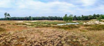 Panorama of Dutch heathland Stock Photo