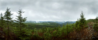 Panorama da floresta de Deap - reflorestamento Imagens de Stock