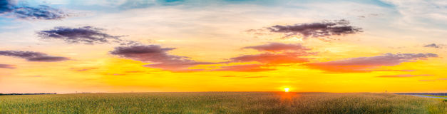 Panorama Of Eared Wheat Field, Summer Cloudy Sky In Sunset Dawn Sunrise Stock Images