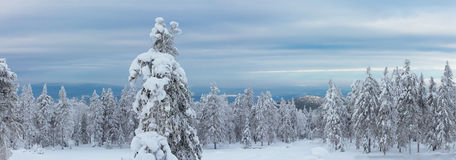 Panorama of the eastern slope of the mountain top Kachkanar Royalty Free Stock Image