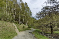 Panorama of ecological path through a  green springtime forest Stock Photo