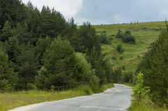 Panorama of ecological path through a  green summer forest, Plana mountain Royalty Free Stock Image