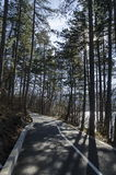Panorama of ecological path through  green winter forest, Lozen mountain, Pancharevo Stock Images