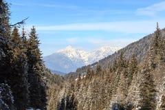 Panorama ed alberi della montagna con neve nell'inverno nelle alpi di Stubai Fotografie Stock Libere da Diritti