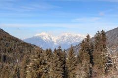 Panorama ed alberi della montagna con neve nell'inverno nelle alpi di Stubai Fotografie Stock