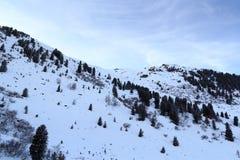 Panorama ed alberi della montagna con neve nell'inverno nelle alpi di Stubai Fotografia Stock Libera da Diritti