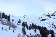 Panorama ed alberi della montagna con neve nell'inverno nelle alpi di Stubai Immagine Stock