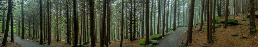 Panorama of Eerie Forest Trail. On misty day royalty free stock image