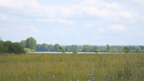 Panorama einer großen Wiese und des Sees vor Wald stock video