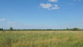 Panorama einer großen Wiese vor Wald stock footage