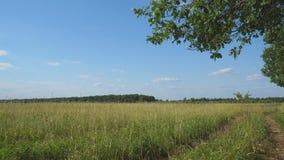 Panorama einer großen Wiese vor Wald stock video footage