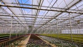 Panorama eines gro?en modernen Gew?chshauses Gro?es helles Gew?chshaus mit einem transparenten Dach und bl?henden Blumen stock footage