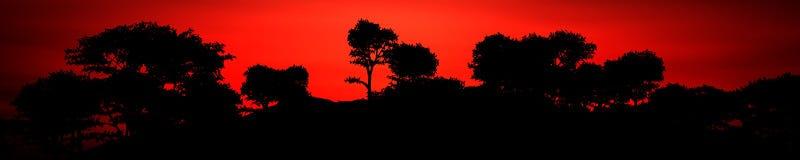Panorama eines Sonnenuntergangs in der Savanne Stockbilder