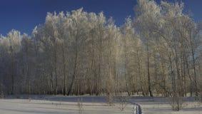 Panorama eines Winterwaldes mit Bäumen und Sträuchen im Frost Stockbild