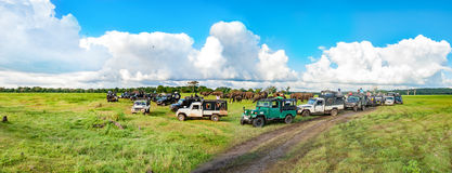 Panorama with elephants and jeeps safari royalty free stock image