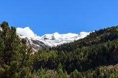Panorama em cumes de Ortler, Stelvio National Park da montanha da geleira de Forni Imagens de Stock