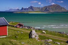 Panorama em Lofoten fotos de stock royalty free