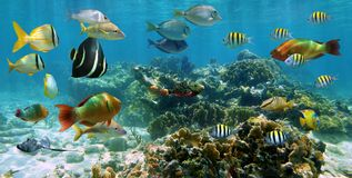 Panorama em um recife coral com o banco de areia dos peixes Fotos de Stock Royalty Free