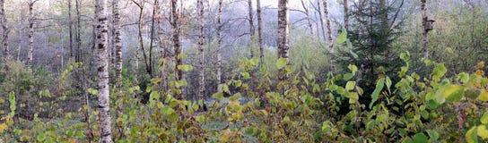 Panorama en el bosque Fotos de archivo libres de regalías