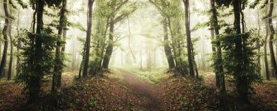 Panorama encantado das madeiras com névoa misteriosa no outono Imagem de Stock