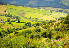 Panorama of Ennglish Coutryside, Staffordshire, UK.. Royalty Free Stock Photos