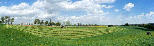 Panorama - Ernte des Grünfutters Stockfotos