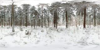 panorama esférico 3D del bosque del invierno con nieve y de pinos con ángulo de visión de 360 grados Aliste para la realidad virt imágenes de archivo libres de regalías