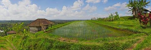 Panorama esotico del campo del terrazzo del riso in Bali Fotografie Stock Libere da Diritti