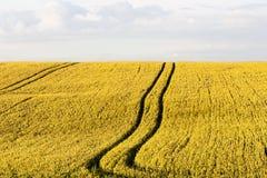 Panorama exterior do trigo do verão Imagens de Stock