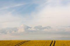 Panorama exterior do trigo do verão Foto de Stock Royalty Free