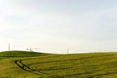 Panorama exterior do trigo do verão com céu azul e nuvens Fábrica Foto de Stock