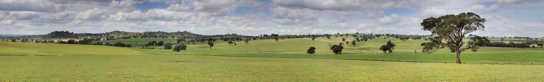 Panorama för Canowindra herde- bygdlandskap Arkivfoto