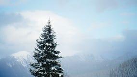 Panorama för himmel för vinter för snöfall för snö för berg för granträd arkivfilmer