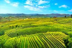 Panorama för Langhe vingårdsolnedgång, Piedmont, Italien Europa royaltyfri fotografi