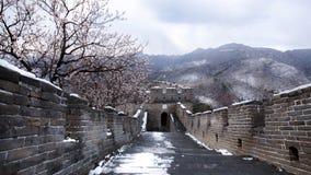 Panorama för stor vägg i vår efter snö, med persikablomningen Arkivbild
