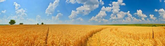 Panorama för vetefält royaltyfria foton