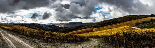 Panorama för vingård för Vertine ` s Royaltyfri Fotografi