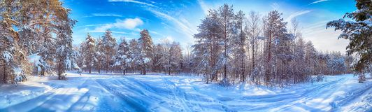 Winter landscape with trees and blue sky stock photo