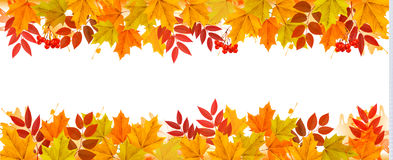 Panorama Fall Autumn Colorful Leaves Background. Vector Stock Images