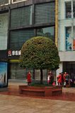 Panorama of the famous Nanjing Road in Shanghai China. A decorated bonsai tree in the beautiful and famous Nanjing Road in Shanghai China. Nanjing road is the Stock Image