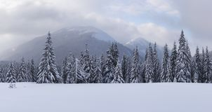 Panorama of fantastic winter landscape with snowy trees royalty free stock photos