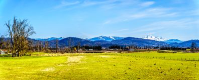 Panorama of Farmland near the Matsqui at the towns of Abbotsford and Mission in British Columbia, Canada. With Mount Baker in the background stock image