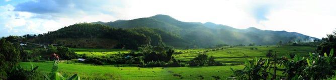Panorama fatto un passo del giacimento del riso Fotografie Stock Libere da Diritti